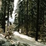 Wanderweg im Schnepfenloch in der Winterzeit